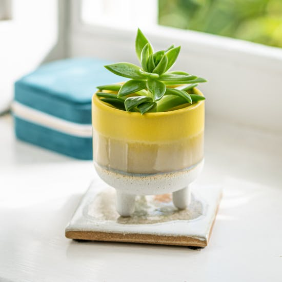 Dip Glazed Stoneware Yellow Planter