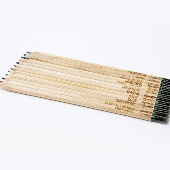 Sprout Herb Colouring Pencil