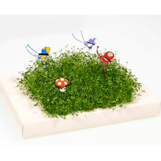 Miniature Gardens With Figures And Accessories