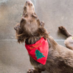 Personalised Pet Christmas Bandana